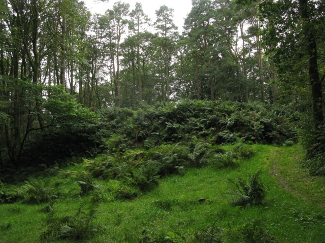 The picturesque wooded landscape at Moat Park motte, which rises beneath the bracken in the centre of the photograph.